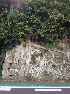 伊王島で見つけた「気になる木」