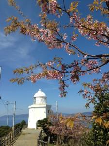 伊王島灯台は、桜が満開